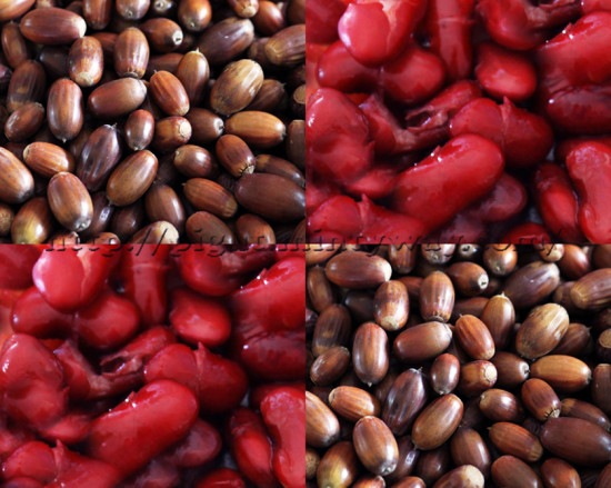 Gland & Haricots Rouges