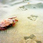 Pas de mouette et crabe